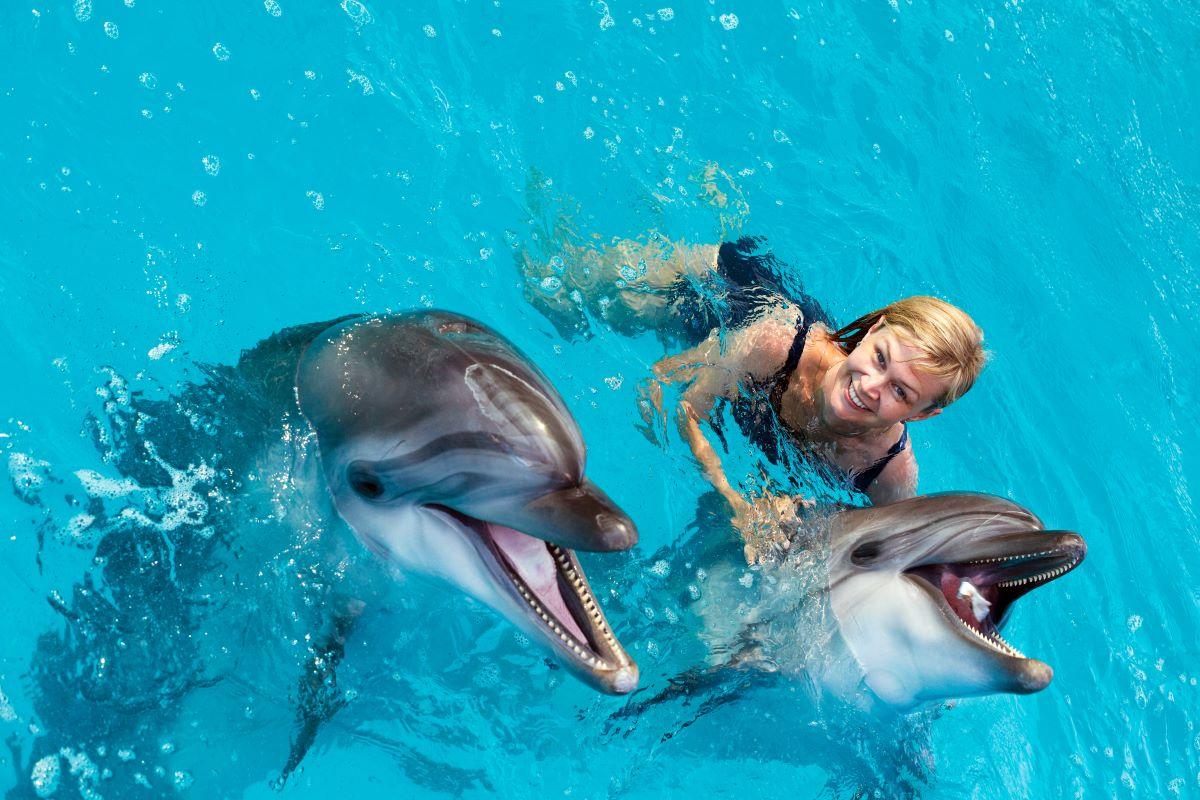 Nadar con delfines en portugal