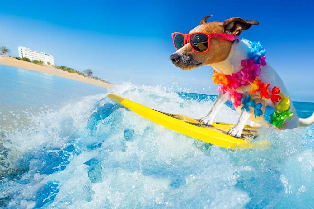 Tipos de surf