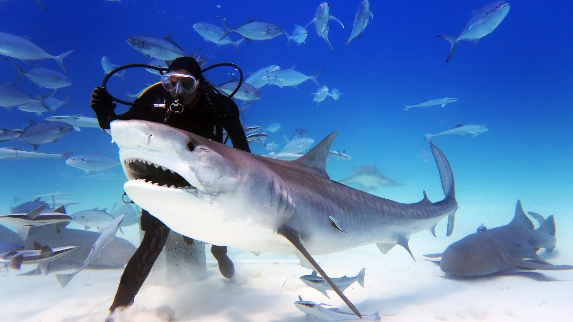 buceo con tiburones
