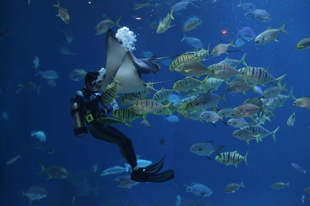 riesgos del submarinismo